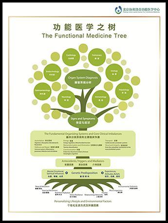 功能医学之树
